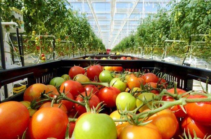 Culturile de iarna in sera sau solar – ce este profitabil