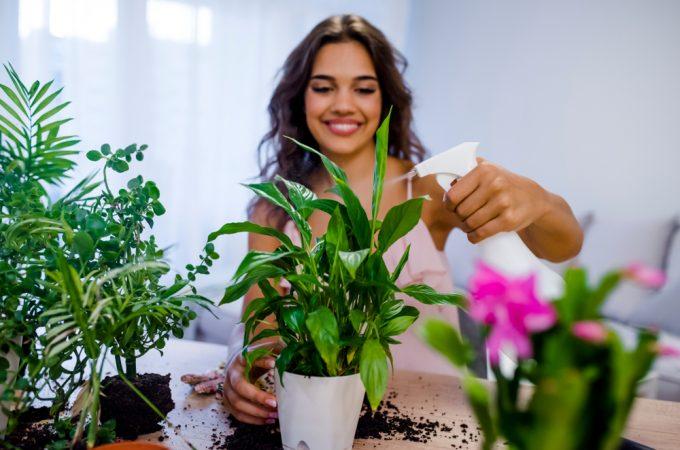 Ce plante sunt recomandate pentru spații mici, la apartament – aflăm de la Sere Flori Mihăiești